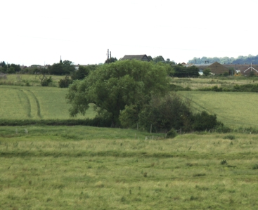 Low density grazing farmland