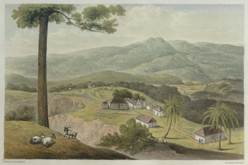 Golden Vale, Jamaica by James Hakewill. Source: Wikisource